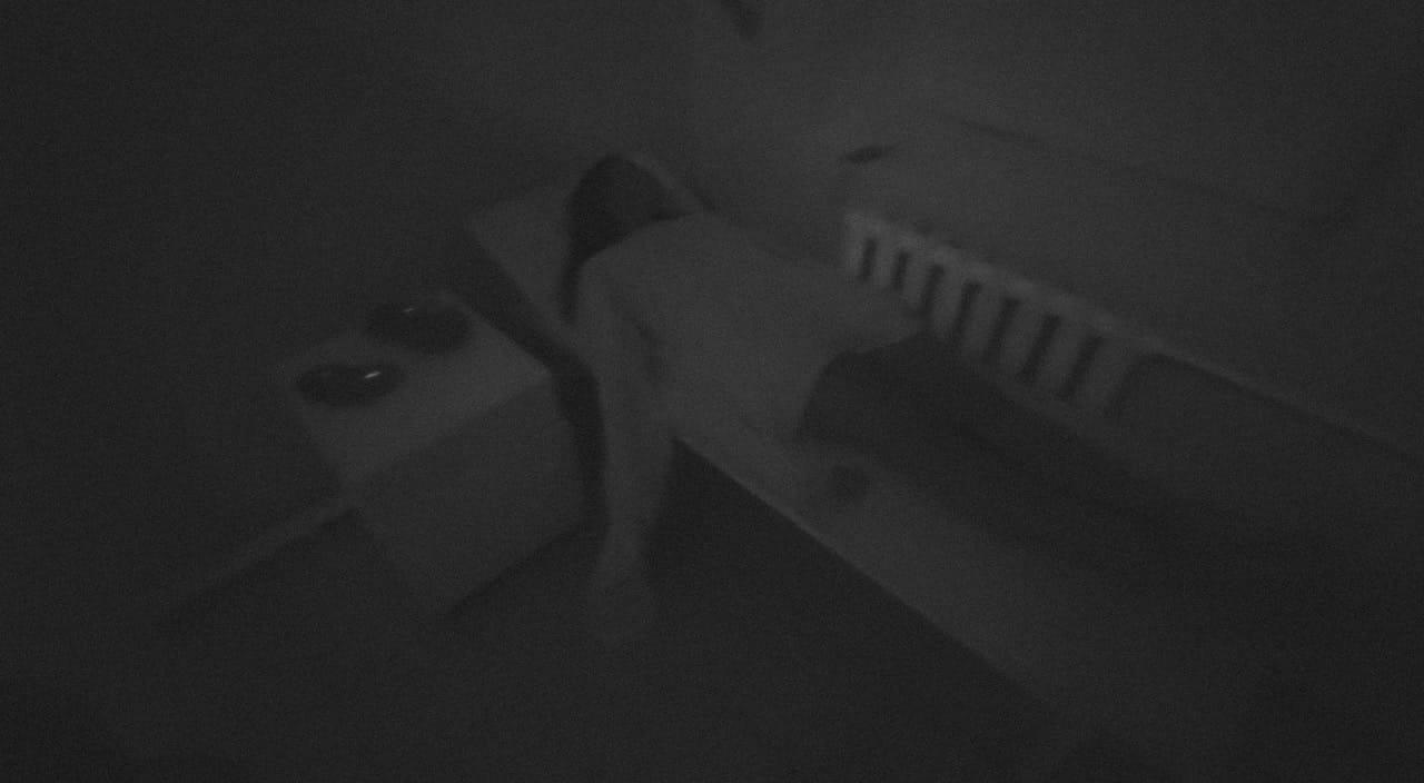 Перформанс Психбольница 2.0. Ужасы Вольтерры в Кемерово фото 1