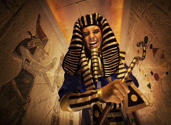 Квест Земля фараонов в Твери