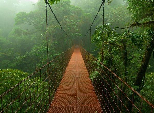 Квест Тайна джунглей в Твери